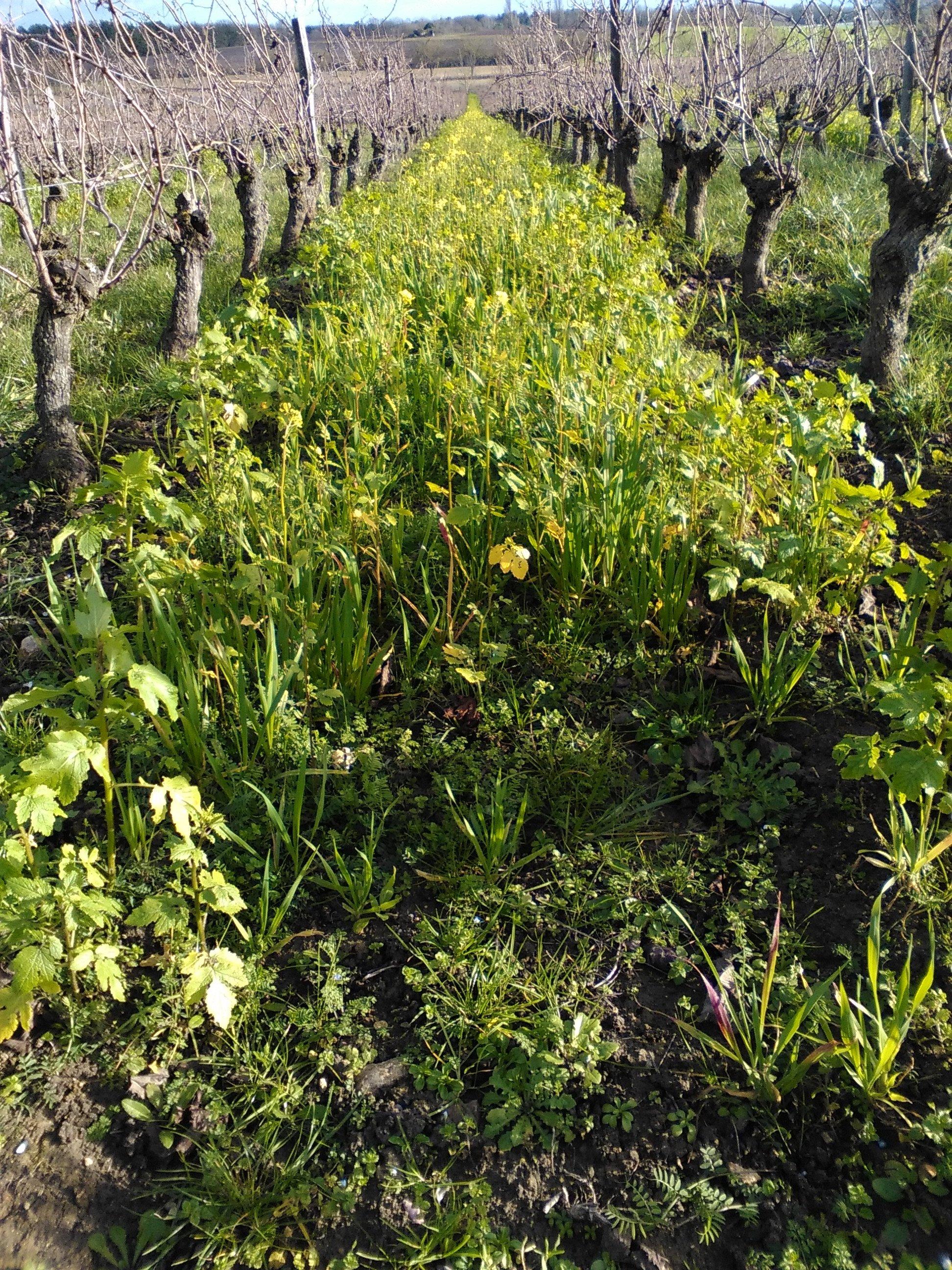 Biofil permaculture fertilisation organique partner for Rendement permaculture